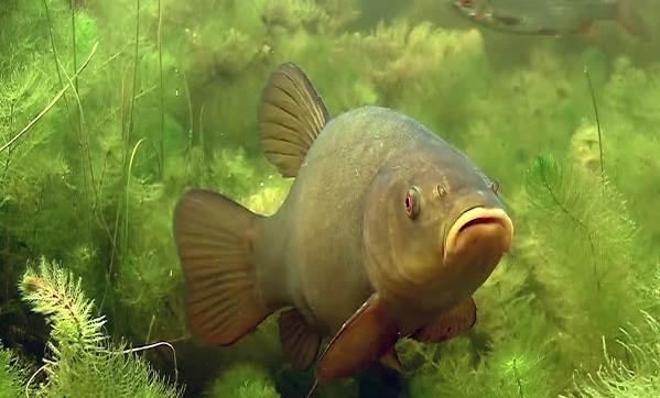 Хищные-рыбы-Названия-описания-и-особенности-хищных-рыб-53