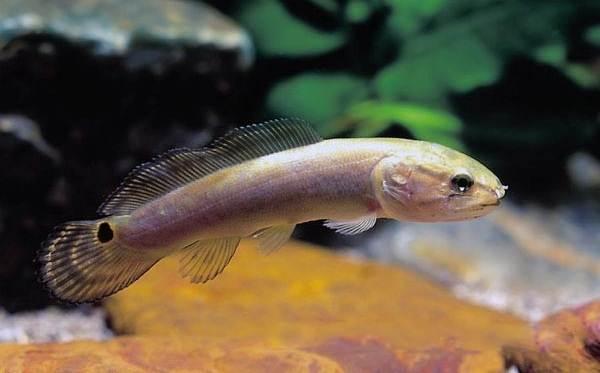 Хищные-рыбы-Названия-описания-и-особенности-хищных-рыб-54