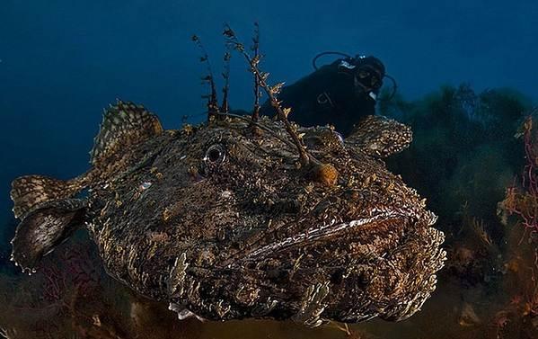 Хищные-рыбы-Названия-описания-и-особенности-хищных-рыб-7