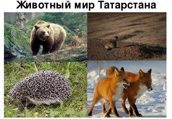 Доклад о охраняемом животном 3822