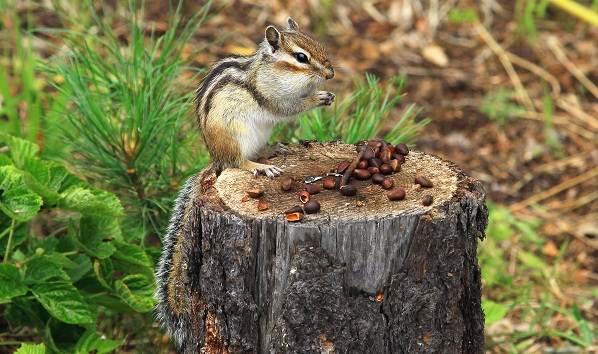 Животные-Татарстана-Описание-названия-и-особенности-животных-Татарстана-19