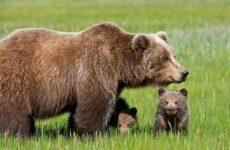 Животные Татарстана. Описание, названия и особенности животных Татарстана