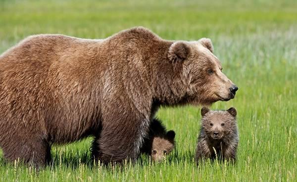 Животные-Татарстана-Описание-названия-и-особенности-животных-Татарстана-23