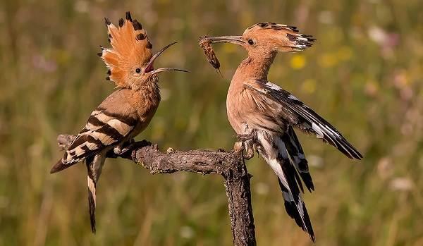 Животные-Татарстана-Описание-названия-и-особенности-животных-Татарстана-34