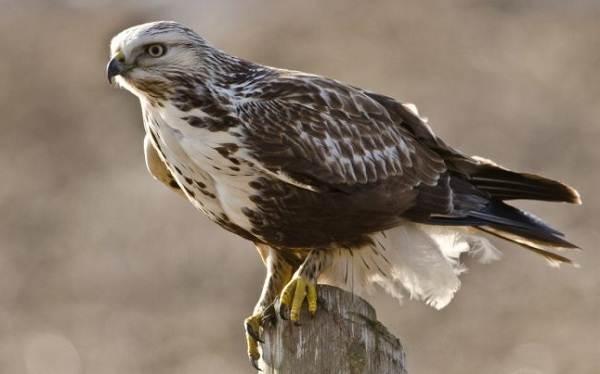 Животные-Татарстана-Описание-названия-и-особенности-животных-Татарстана-44