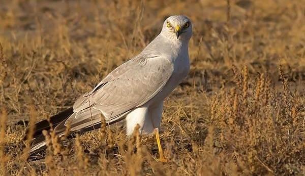 Животные-Татарстана-Описание-названия-и-особенности-животных-Татарстана-45