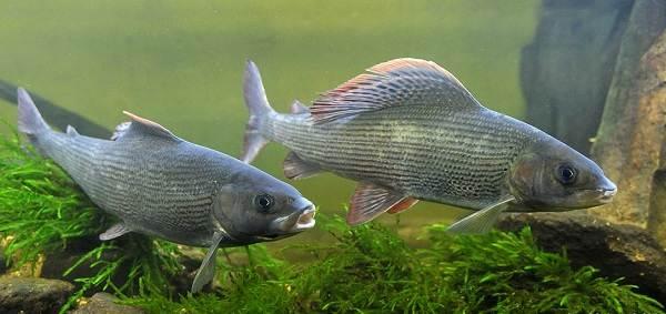 Животные-Татарстана-Описание-названия-и-особенности-животных-Татарстана-56