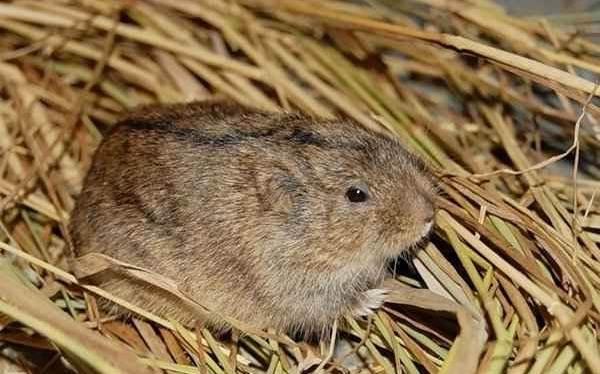 Животные-Татарстана-Описание-названия-и-особенности-животных-Татарстана-8