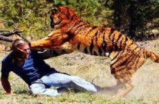 5 животных убивших дрессировщиков