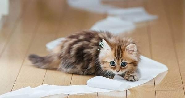 Как-приучить-котенка-к-лотку-1
