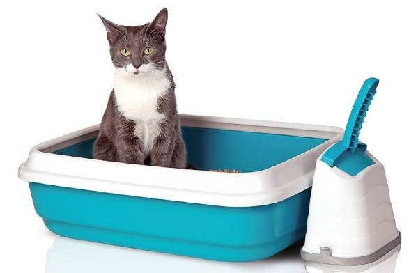 Как-приучить-котенка-к-лотку-2