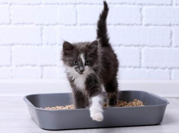Как-приучить-котенка-к-лотку-3