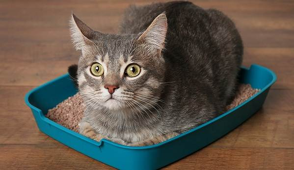 Как-приучить-котенка-к-лотку-5