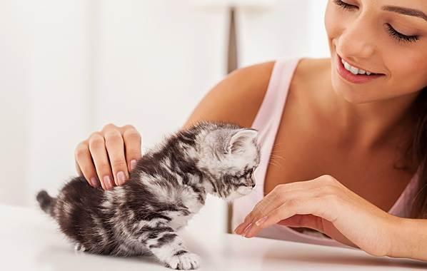 Как-приучить-котенка-к-лотку-6