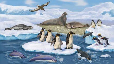Животные Антарктики. Описание, названия и особенности животных Антарктики