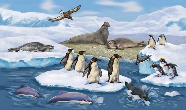 Животные-Антарктики-Описание-названия-и-особенности-животных-Антарктики-1