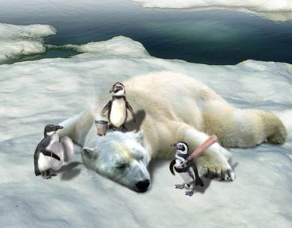 Почему-белый-медведь-не-ест-пингвинов-1