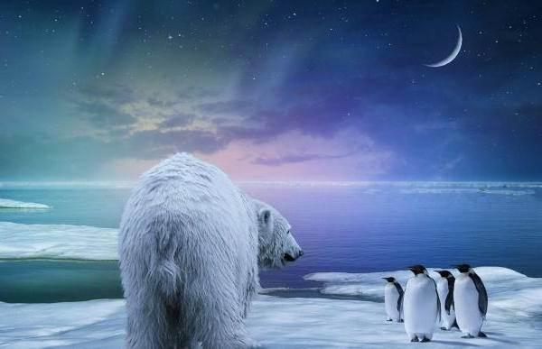 Почему-белый-медведь-не-ест-пингвинов-4
