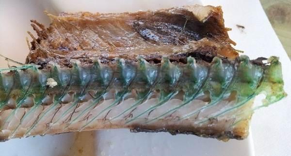 Сарган-рыба-Описание-особенности-и-среда-обитания-рыбы-сарган-2