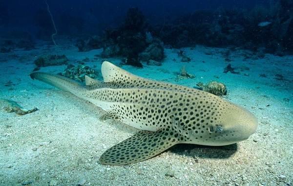 Виды-акул-Описание-названия-и-особенности-акул-14