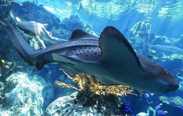 Виды-акул-Описание-названия-и-особенности-акул-16