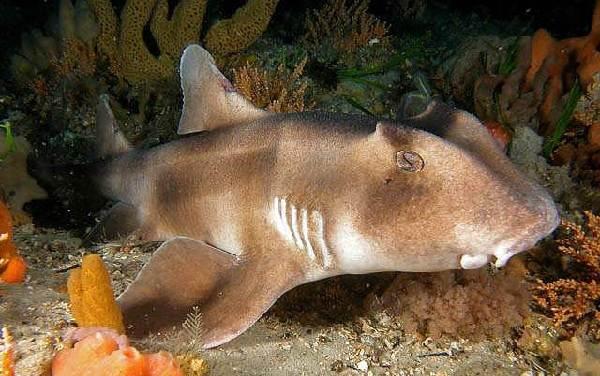 Виды-акул-Описание-названия-и-особенности-акул-17