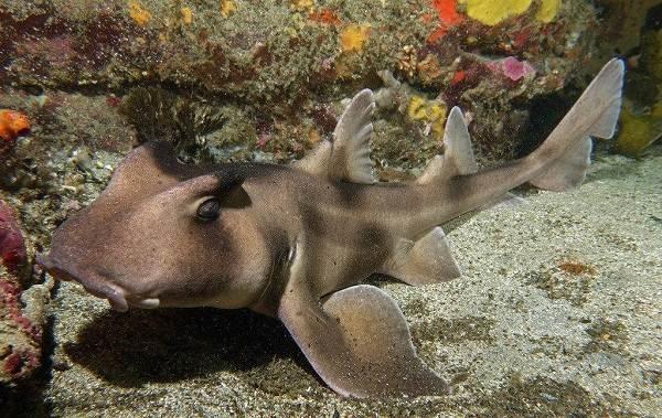 Виды-акул-Описание-названия-и-особенности-акул-19