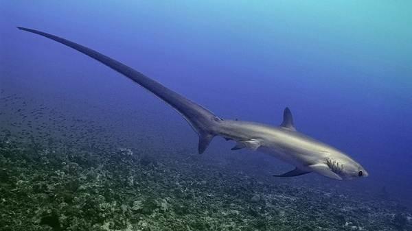 Виды-акул-Описание-названия-и-особенности-акул-25