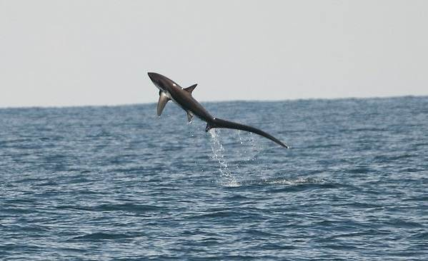 Виды-акул-Описание-названия-и-особенности-акул-26