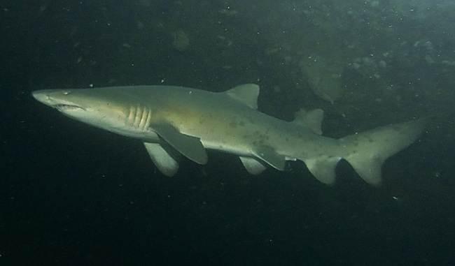 Виды-акул-Описание-названия-и-особенности-акул-28
