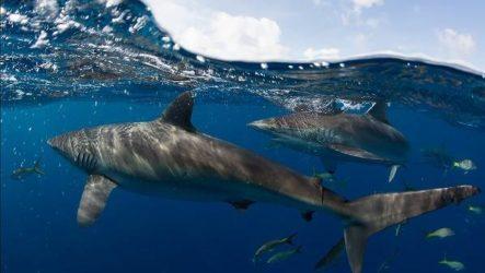 Виды акул. Описание, названия и особенности акул