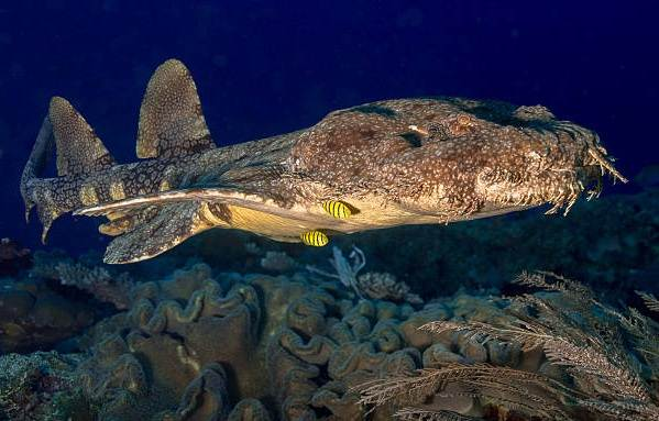 Виды-акул-Описание-названия-и-особенности-акул-34