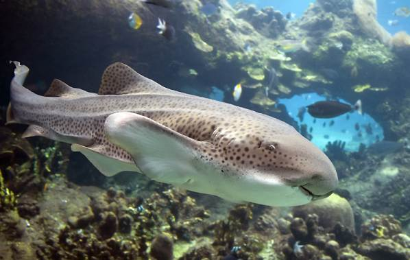Виды-акул-Описание-названия-и-особенности-акул-36