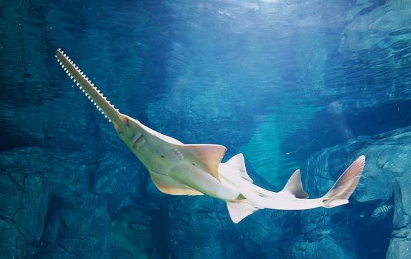 Виды-акул-Описание-названия-и-особенности-акул-39