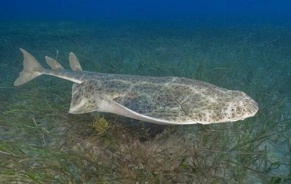 Виды-акул-Описание-названия-и-особенности-акул-42