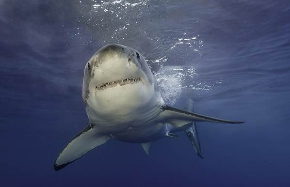 Виды-акул-Описание-названия-и-особенности-акул-44