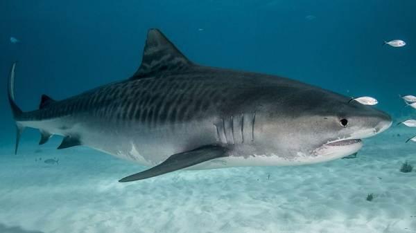 Виды-акул-Описание-названия-и-особенности-акул-6