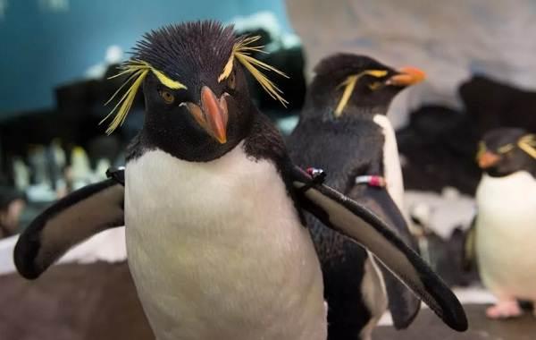 Водоплавающие-птицы-Описание-названия-и-особенности-водоплавающих-птиц-112