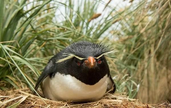 Водоплавающие-птицы-Описание-названия-и-особенности-водоплавающих-птиц-113