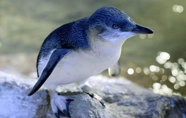 Водоплавающие-птицы-Описание-названия-и-особенности-водоплавающих-птиц-114