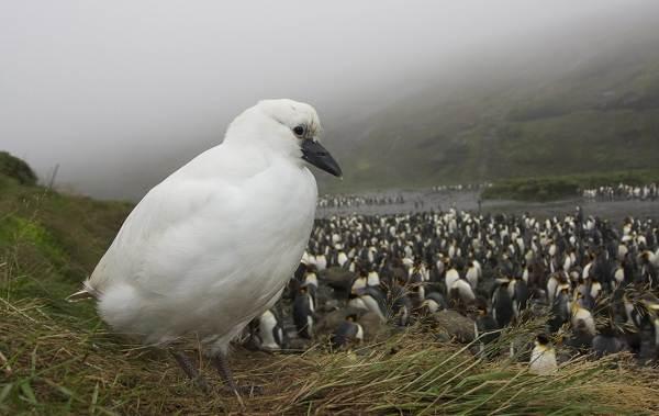 Водоплавающие-птицы-Описание-названия-и-особенности-водоплавающих-птиц-116