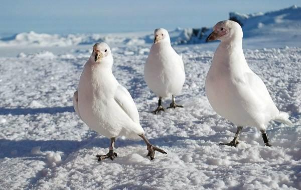 Водоплавающие-птицы-Описание-названия-и-особенности-водоплавающих-птиц-117