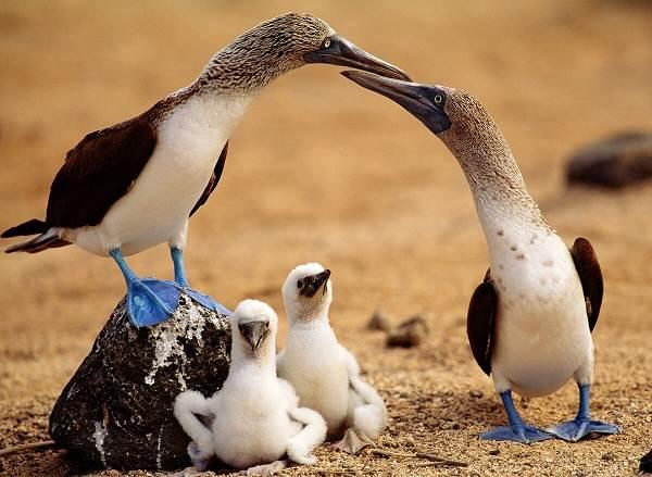 Водоплавающие-птицы-Описание-названия-и-особенности-водоплавающих-птиц-120
