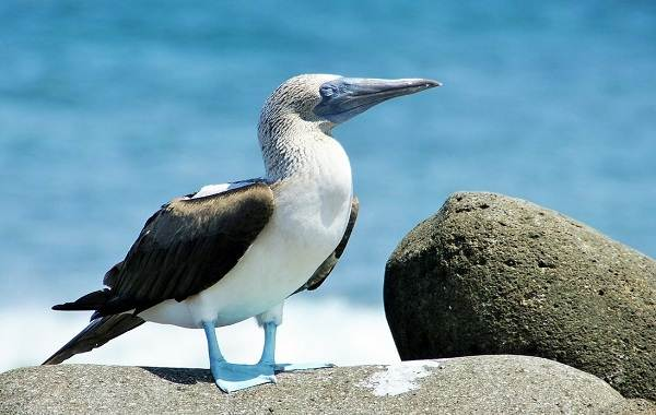 Водоплавающие-птицы-Описание-названия-и-особенности-водоплавающих-птиц-121