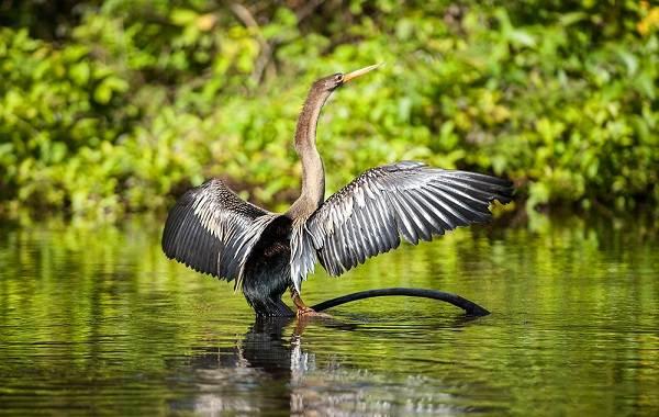 Водоплавающие-птицы-Описание-названия-и-особенности-водоплавающих-птиц-122
