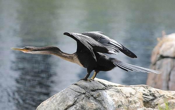 Водоплавающие-птицы-Описание-названия-и-особенности-водоплавающих-птиц-123