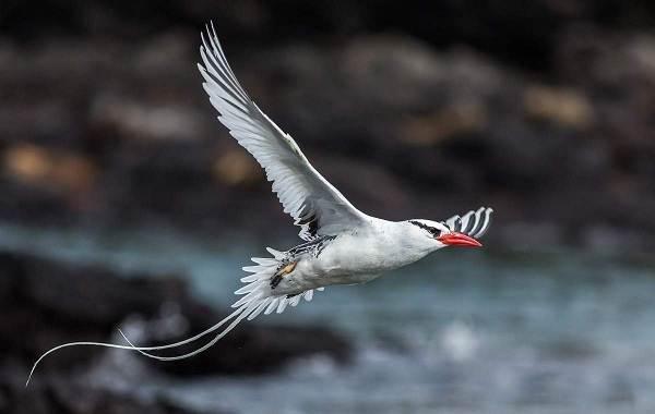 Водоплавающие-птицы-Описание-названия-и-особенности-водоплавающих-птиц-124