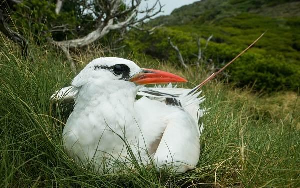 Водоплавающие-птицы-Описание-названия-и-особенности-водоплавающих-птиц-125