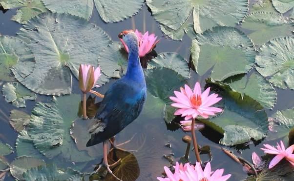 Водоплавающие-птицы-Описание-названия-и-особенности-водоплавающих-птиц-129
