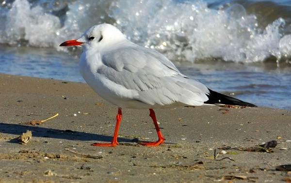 Водоплавающие-птицы-Описание-названия-и-особенности-водоплавающих-птиц-132